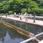 【滋賀】醒井養鱒場で遊んで釣って食べる