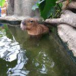 絶対行くべき動物園【神戸どうぶつ王国】