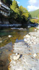 オートキャンプ沢谷の前に流れるきれいな川