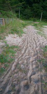 砂浜区画サイトへの道